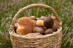 Pilze in schwachem Lizenzfreie Stockfotos