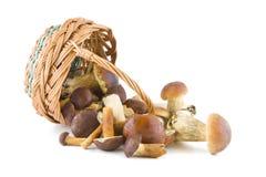 Pilze und ein Korb Stockbild