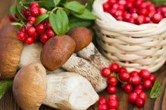 Pilze und ein Korb von Moosbeeren, Abschluss oben Lizenzfreies Stockfoto