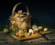 Pilze und Gewürze Stockfoto