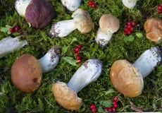 Pilze und Hagebutten auf Gras lizenzfreie stockfotografie
