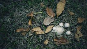 Pilze und Herbstblätter Stockfotografie