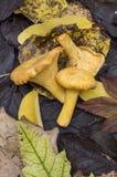 Pilze und Herbstblätter lizenzfreie stockfotografie