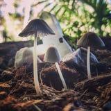 Pilze und Kristalle stockfoto