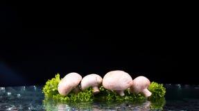 Pilze und Salat mit Wassertropfenspritzen Lizenzfreie Stockfotos