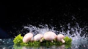 Pilze und Salat mit Wassertropfenspritzen Lizenzfreies Stockbild