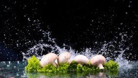 Pilze und Salat mit Wassertropfenspritzen Lizenzfreies Stockfoto