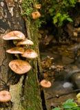 Pilze und Strom Lizenzfreies Stockbild