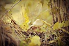 Pilze unter Blättern Stockfotos