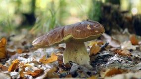 Pilze unter einem Busch Stockbild