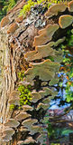 Pilze - Unterseite oben Stockfoto