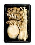Pilzfamilie Lizenzfreie Stockbilder