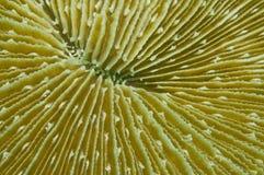 Pilzkorallenbeschaffenheit Stockbild