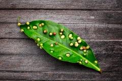 Pilzkrankheit auf Blatt, Krankheitsstellen stockbild