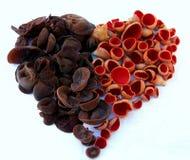 Pilzstillleben mit den braunen und roten Pilzen Lizenzfreie Stockfotografie