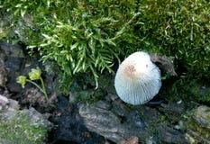 Pilzweiß im Hintergrund der Barke und im Moos im Sommer Lizenzfreie Stockfotografie