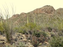 Pima Canyon Arizona Stock Photo