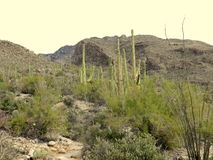 Pima Canyon Landscape Stock Photo