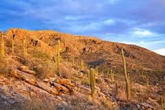 Pima Canyon. Sunset in Pima Canyon near Tucson royalty free stock image