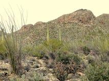 Pima kanjon Arkivfoto