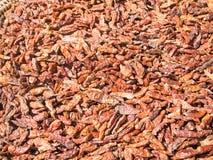 Pimentão secado imagem de stock