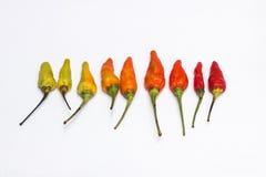 Pimentão vermelho alinhado Foto de Stock