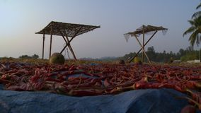 Pimentões que secam no sol, Yangon, Myanmar video estoque