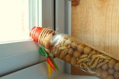 Piment dans la bouteille Photographie stock
