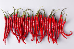 Piment rouge Photo stock