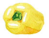 Pimenta amarela da aquarela grande Fotos de Stock