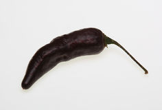 Pimenta da Neyde black Chili, chili pepper Royalty Free Stock Images