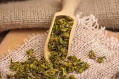 Pimenta de Bell verde Fotos de Stock Royalty Free