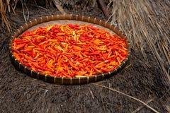 Pimenta de pimentão Fotografia de Stock