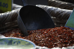 Pimenta de pimentão Fotos de Stock Royalty Free