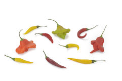 Pimenta de pimentão amarela e isolatad picante da pimenta (escorpião de Trinidad) no branco Imagens de Stock Royalty Free