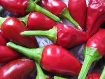 Pimenta de pimentão perfumada Foto de Stock Royalty Free