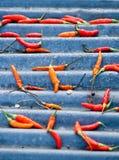 Pimentão picante Fotografia de Stock
