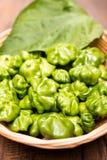 Pimenta de pimentão verde Mini Bonnet imagem de stock
