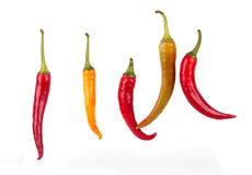 Pimenta de pimentões Fotos de Stock