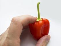 Pimenta de sino vermelha pequena Fotografia de Stock Royalty Free