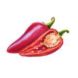 Pimenta doce vermelha Isolado no fundo branco illus da aquarela Imagens de Stock Royalty Free