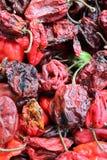 Pimenta fria do Habanero Imagem de Stock