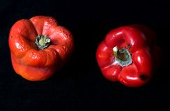 Pimenta moyldy vermelha em um fundo preto Fotos de Stock Royalty Free