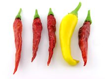 Pimenta Multi-coloured. imagem de stock