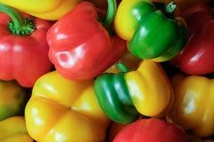Pimenta multicolorido foto de stock