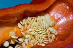 Pimenta para dentro Fotografia de Stock