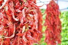 Pimenta picante no mercado Fotografia de Stock