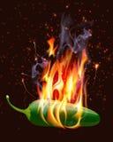 Pimenta quente ardente de Jelapeno Foto de Stock Royalty Free
