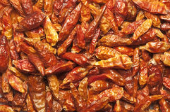 Pimenta quente secada Fotos de Stock