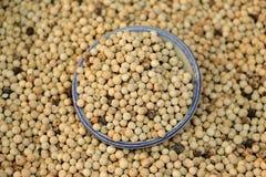 Pimenta tailandesa branca Foto de Stock Royalty Free
